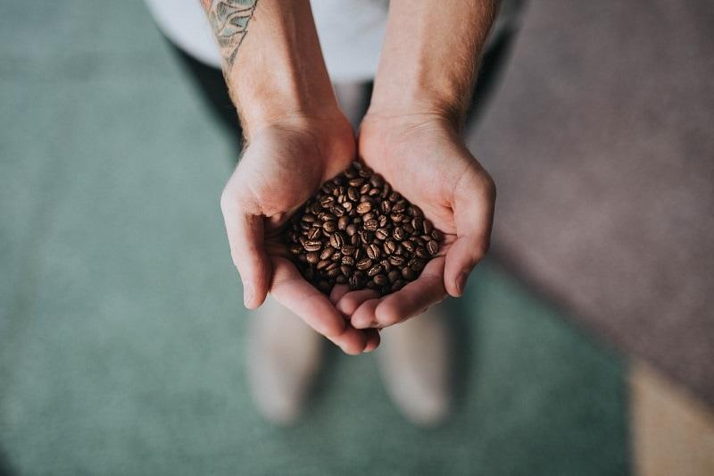 upražené kávové zrná v dlaniach