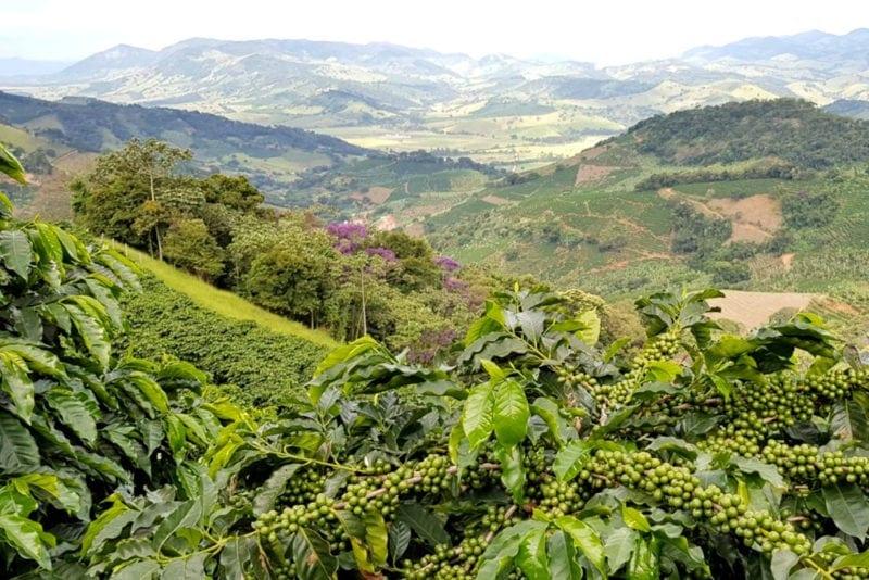 fotografia Plačúcich hôr a kávovníkov