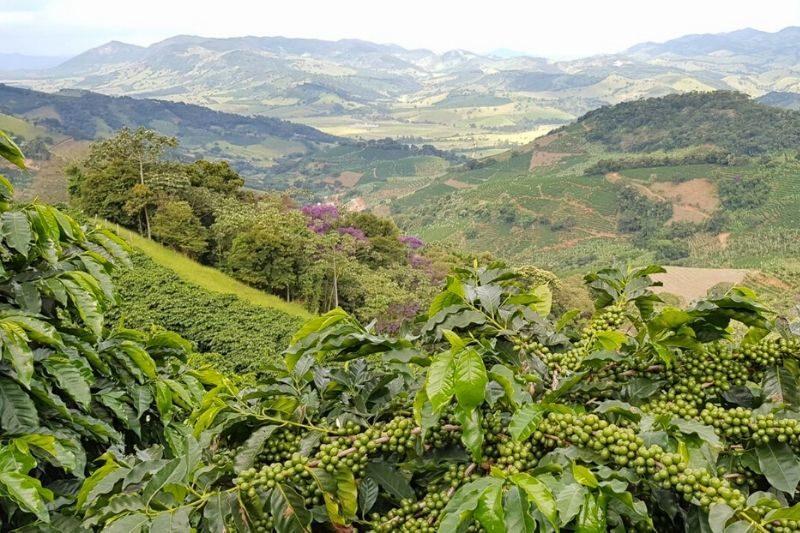 záber na kávovníkové plantáže v Brazílii