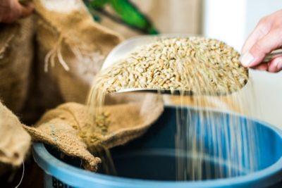 zelené kávové zrná na lopatke