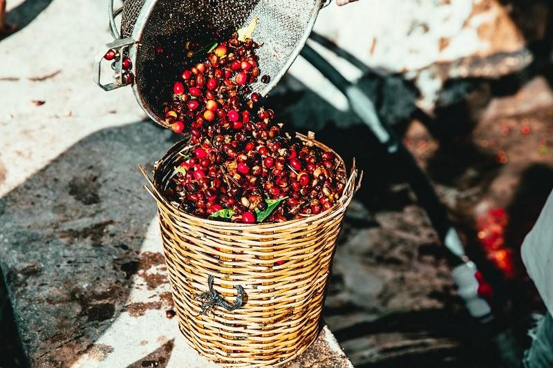 kávovnikové čerešne v pletenom koši