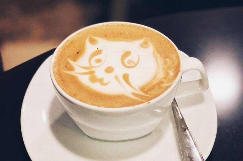 obrázok mačky vytvorený mliekom