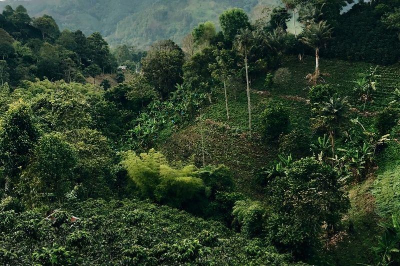 kávová oblasť v regióne Quindío v Kolubii