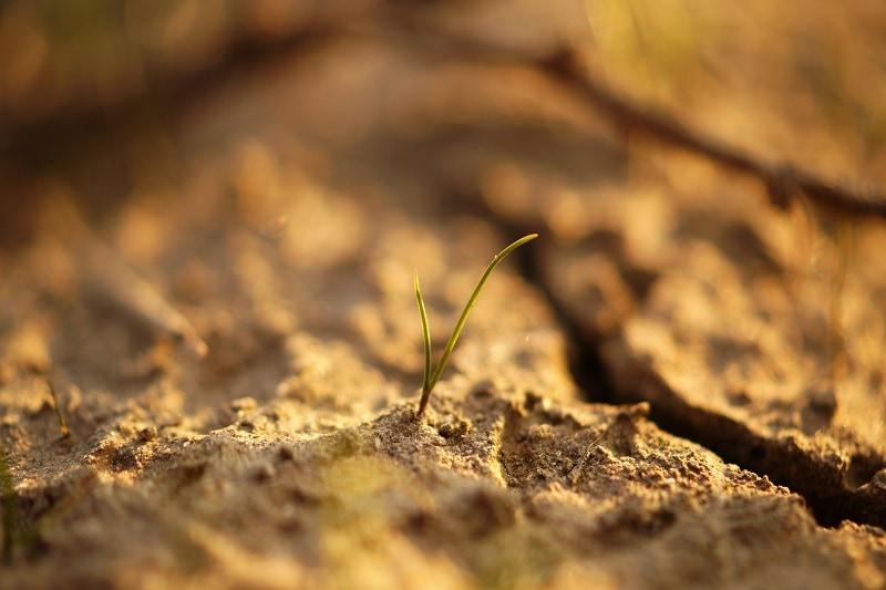 detail na rastlinu v pôde